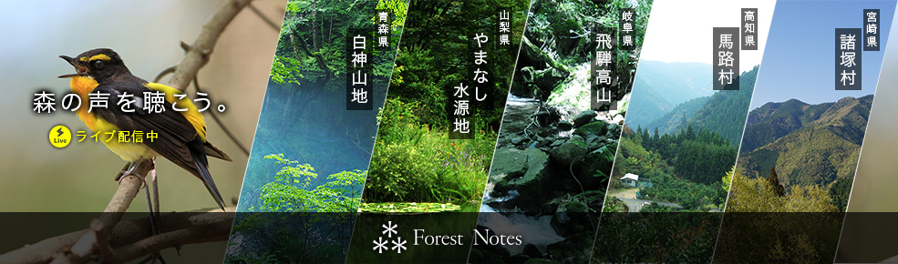 Forest Notes
